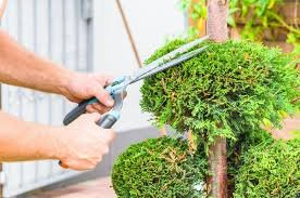 Get Professional Tree Trimming Service - Hoover Horticultural